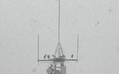 Tàrrega: Retirada de dispositius metàl.lics a l'antena de Movistar