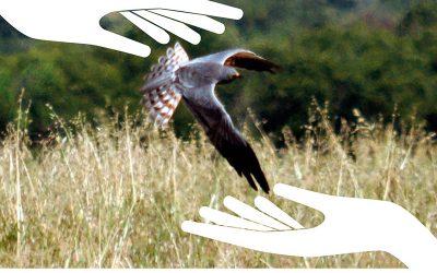 Xerrada: El repte de la conservació dels ocells estèpics