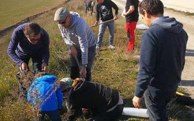 Per segon any planten alzines als marges del Canal Segarra Garrigues per recuperar la biodiversitat de l'entorn