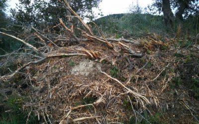 Denuncia per la destrossa de l'arbrat a les carreteres C-14 i L- 220 a la comarca de l'Urgell.