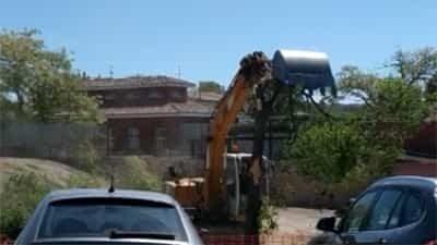 El Grup d'Ecologia i de Medi Ambient de Tàrrega denuncia la tala innecessària i absurda de l'arbrat de l'aparcament de la zona del Castell