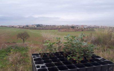 Plantacióde llavors i reforestació  dels erms del canal